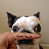 Elisa: Mustache