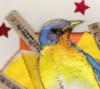 Bluebird Close-up