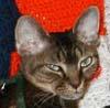 Aureth: grumpy cat