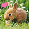 kidalanna: bunny heart