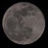 moon, blue moon