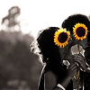 Jess: stock -->> sunflowers