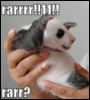 porpurina: panda rarr
