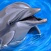 delfinenka userpic