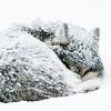 graywolfgirl userpic