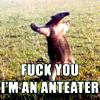 President Airlock: anteater