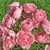 gardens7 userpic
