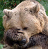 Animal: Facepalm