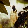 Amsie: Forest White