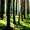 the original sinner: trees