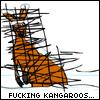 FUCKING KANGAROOS...