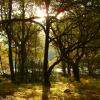 осень-лес