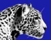 briliant_blue userpic