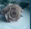 rosarosa userpic