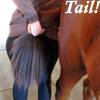 tail!
