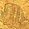 aquascop userpic