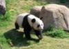 panda1127 userpic