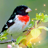 dilь: птица