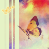 tiah15: butterflies