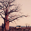 movies/ tree australia