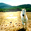 Just a story in the end.: Animal >> white horse