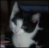 littlemiss_cute userpic