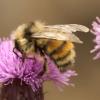 Douglas Triggs: bee 2