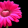 a_chara userpic