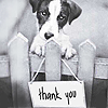 Andrea: doggie thank you