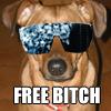 free female dog