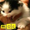 misc - mod!kitten