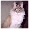 sleepcat_00 userpic