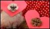 animals - kittehs