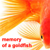 amusement-memory-goldfish