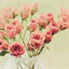 Scarlet: roses