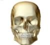 medicalhead