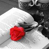 Rose and Book by sallymn