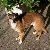 my_dog_owns_you userpic