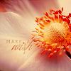Sabi: {Stock} Flower