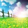 annj_g80: fence