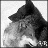 haruechan: Sirius/Remus