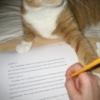 editor kitteh