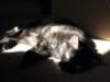 girlandher_cat userpic