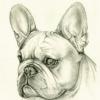 Victor Ashik: bulldog