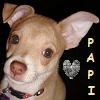 Papi da Puppy!
