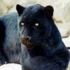 panther235 userpic