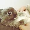 Maz (or foxxy!): Cute bunny