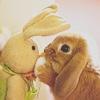 Maz (or foxxy!): Toy bunny