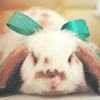 Maz (or foxxy!): Beribboned bunny
