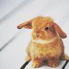 Maz (or foxxy!): Cute bunny 2
